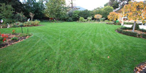 lawn seed lawn
